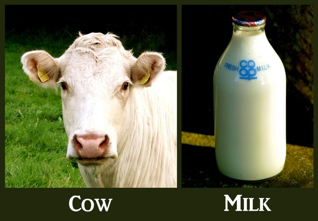 Cow and milk bottle