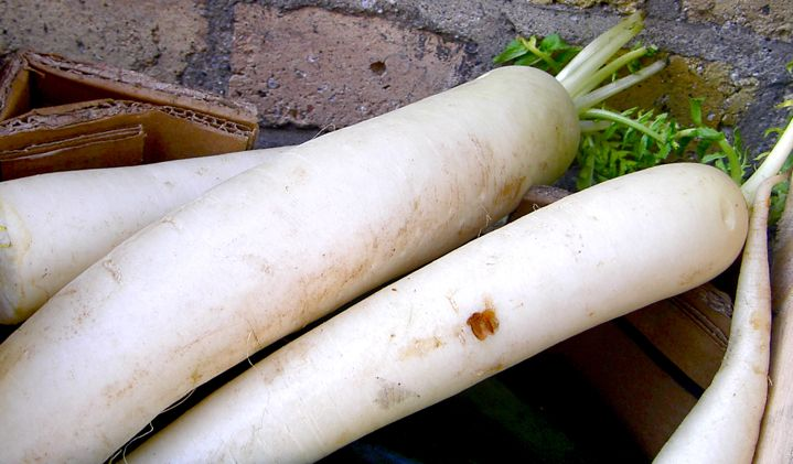 Fresh whole daikon
