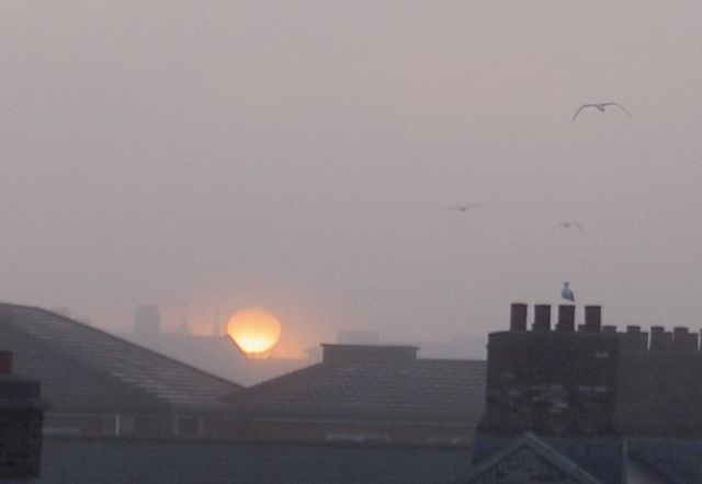 Seagulls in foggy sunrise