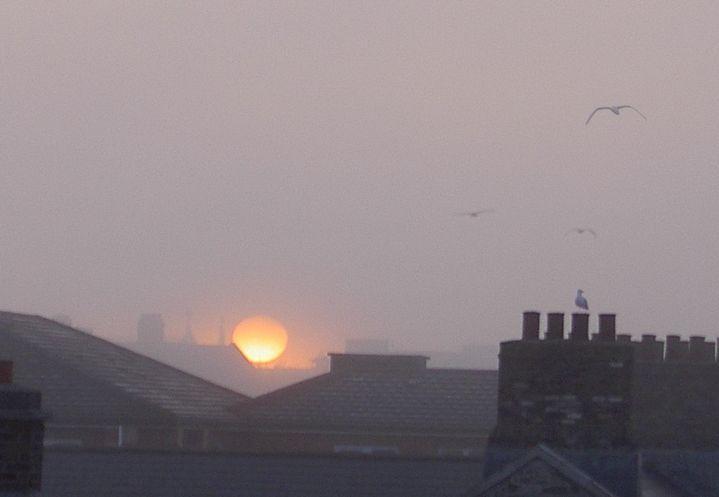 Seagulls in foggy sunrise