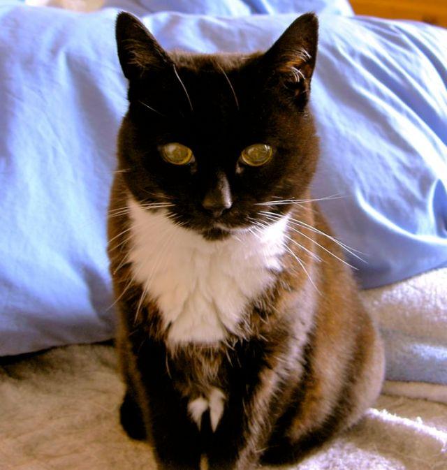 Butthurt Cat