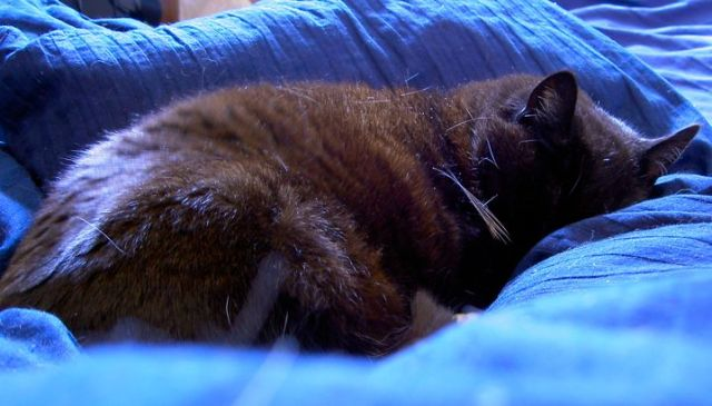 Curled up kitty on the duvet